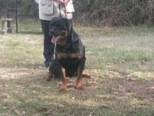 Ibarra.- El 17 de mayo se realizó el acto de entrega-recepción de los canes, al GAD de Ibarra. | Foto: Cortesía