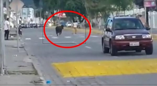 toro-escapado